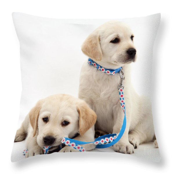 Goldidor Retriever Puppies Throw Pillow by Jane Burton