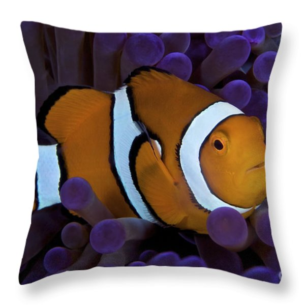 False Ocellaris Clownfish In Its Host Throw Pillow by Terry Moore