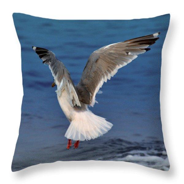 Seagull  Throw Pillow by Debra  Miller