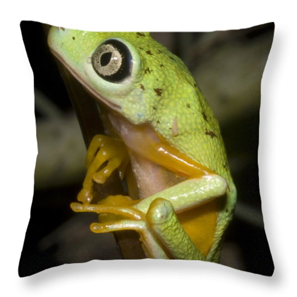 Tree Frog Throw Pillow by Dante Fenolio