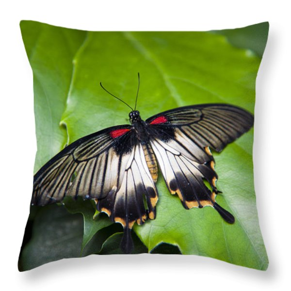 A Butterfly Rests On A Leaf Throw Pillow by Taylor S. Kennedy