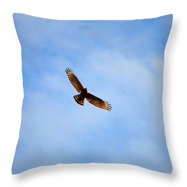 Red Shouldered Hawk In Flight Throw Pillow by Jai Johnson