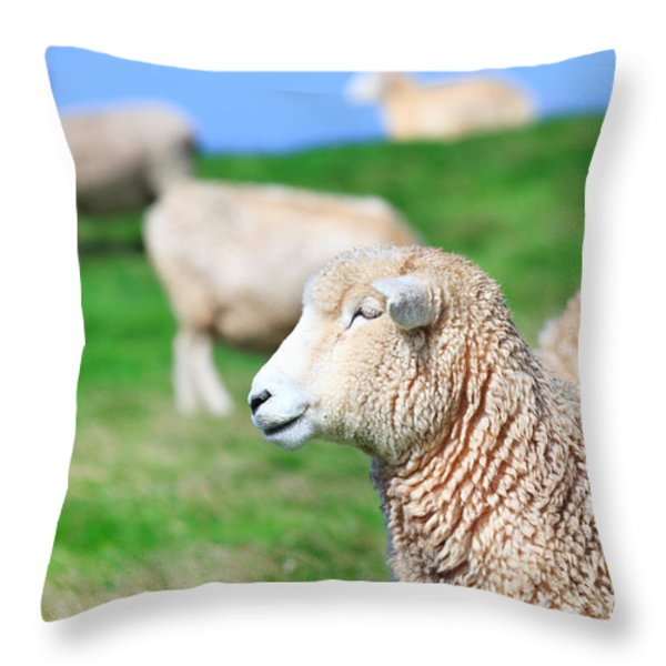 Sheeps Throw Pillow by MotHaiBaPhoto Prints