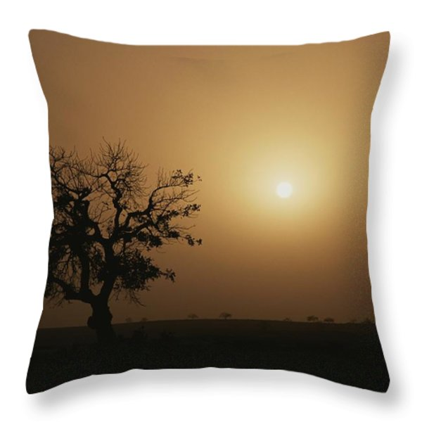 A Baobab Tree Adansonia Digitata Throw Pillow by Bobby Model