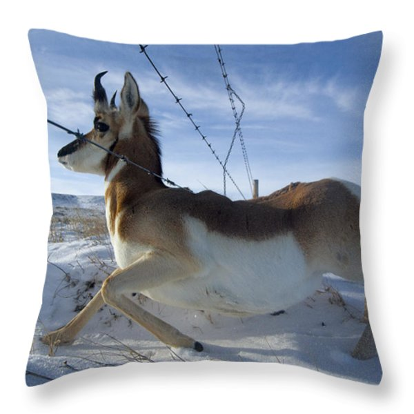 A Barbed Wire Fence Is An Obstacle Throw Pillow by Joel Sartore