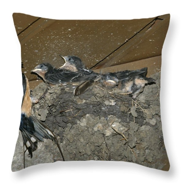 A Barn Swallow Mother Feeds Her Young Throw Pillow by Norbert Rosing