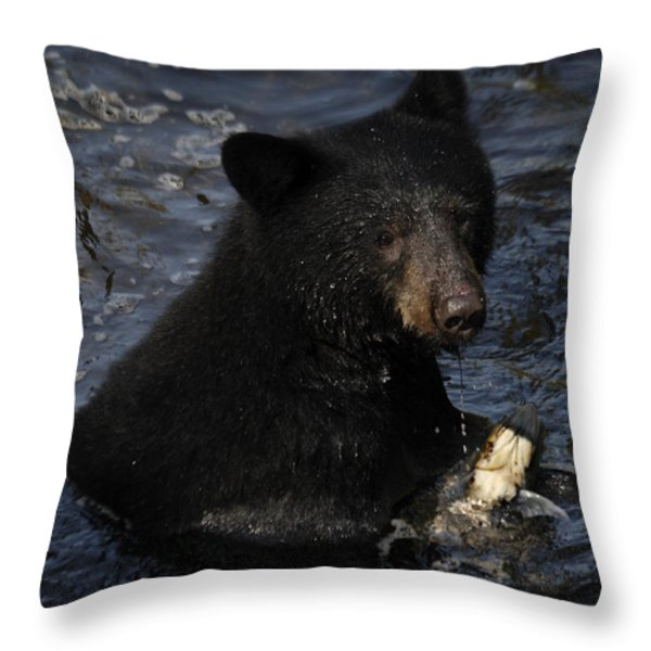 A Black Bear Feeds On Salmon In Anan Throw Pillow by Melissa Farlow