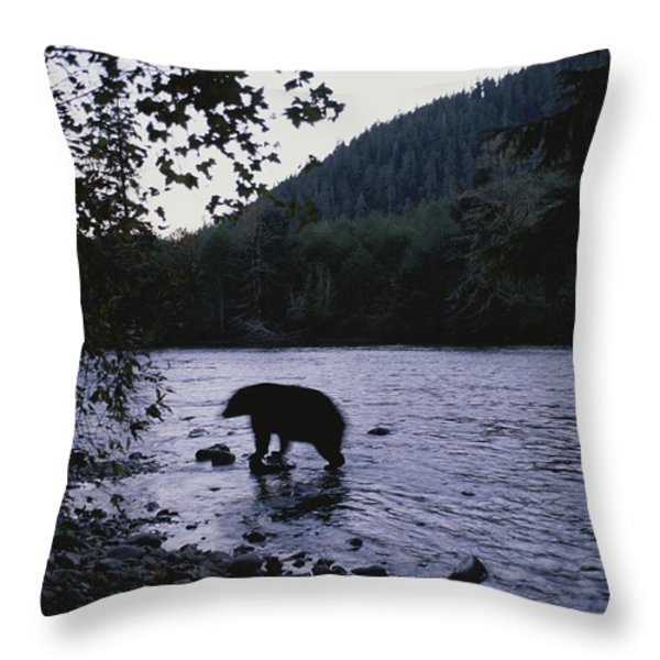 A Black Bear Searches For Sockeye Throw Pillow by Joel Sartore