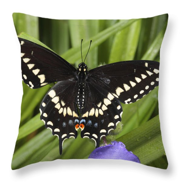 A Black Swallowtail Butterfly, Papilio Throw Pillow by George Grall