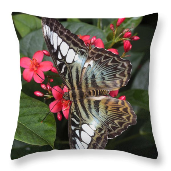 A Blue Clipper Butterfly Feeds Throw Pillow by George Grall