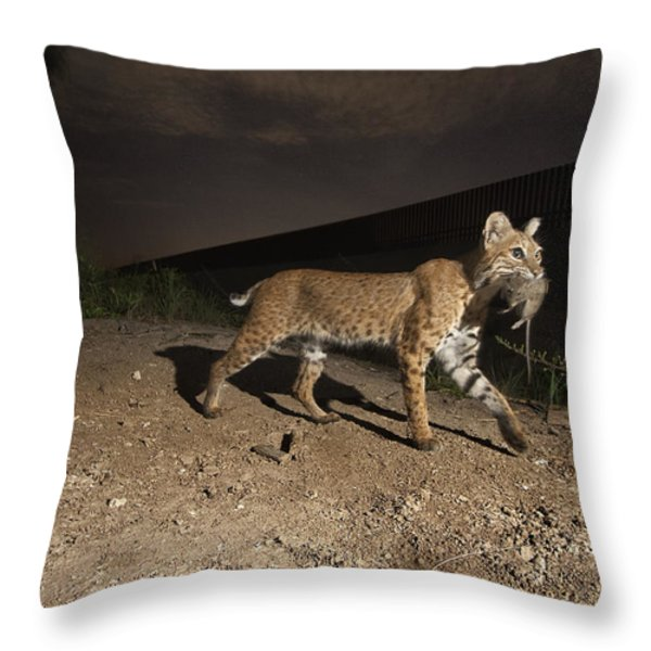 A Bobcat Crosses A Rio Grande Border Throw Pillow by Joel Sartore
