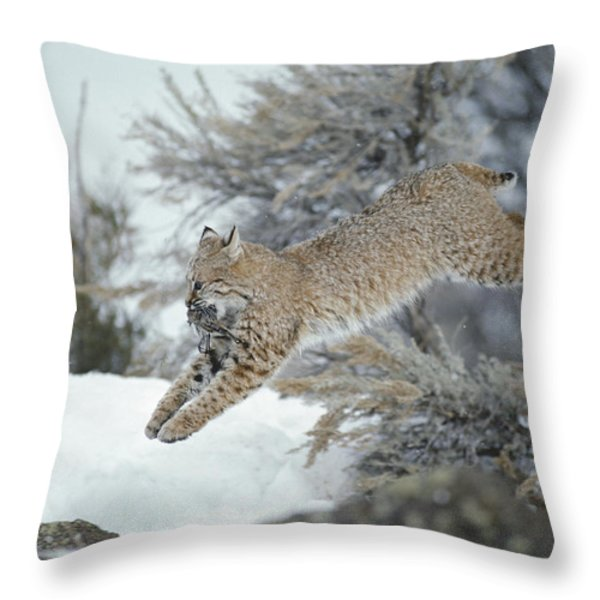 A Bobcat Leaps With A Horned Lark Throw Pillow by Michael S. Quinton