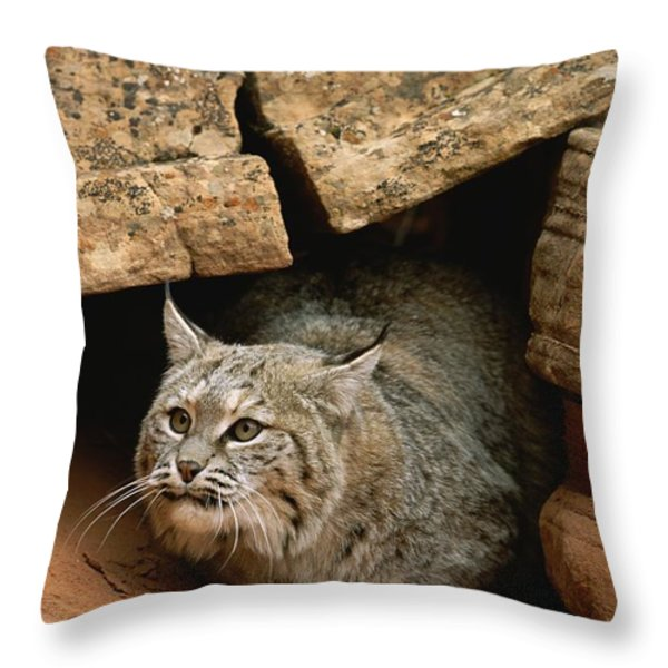 A Bobcat Pokes Out From Its Alcove Throw Pillow by Norbert Rosing