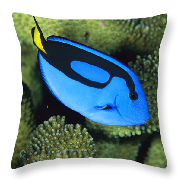 A Bright Blue Palette Surgeonfish Throw Pillow by Tim Laman