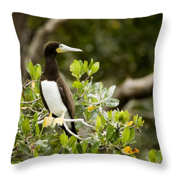 A Brown Booby Sula Leucogaster Throw Pillow by Tim Laman