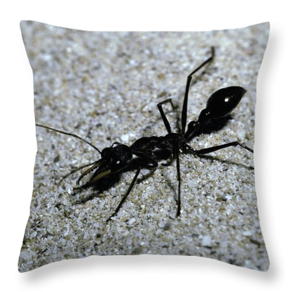 A Bull Ant With Jaws Opened Throw Pillow by Jason Edwards