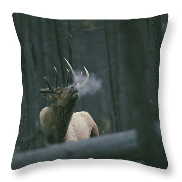 A Bull Elk Bugles, Emitting A Frosty Throw Pillow by Michael S. Quinton