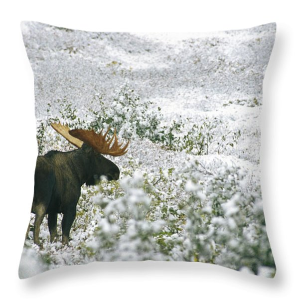 A Bull Moose On A Snow Covered Hillside Throw Pillow by Rich Reid