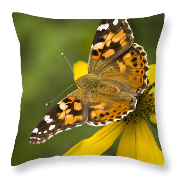 A Butterfly Sits Atop A Yellow Throw Pillow by Ralph Lee Hopkins