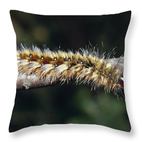 A Caterpillar In Defensive Posture Throw Pillow by Jason Edwards