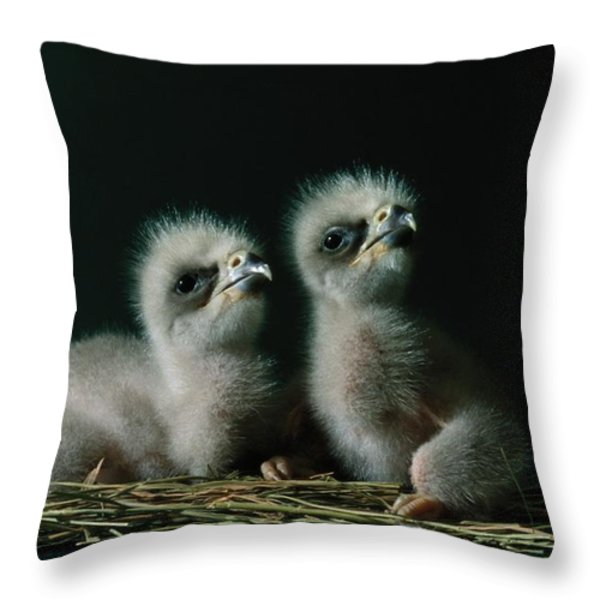 A Close-up Shows Two Southern American Throw Pillow by Joel Sartore