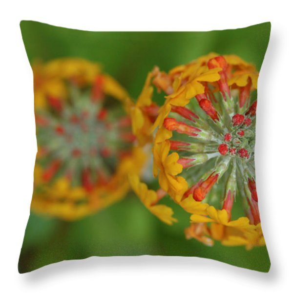 A Close Up View Of Flowering Stalks Throw Pillow by Darlyne A. Murawski