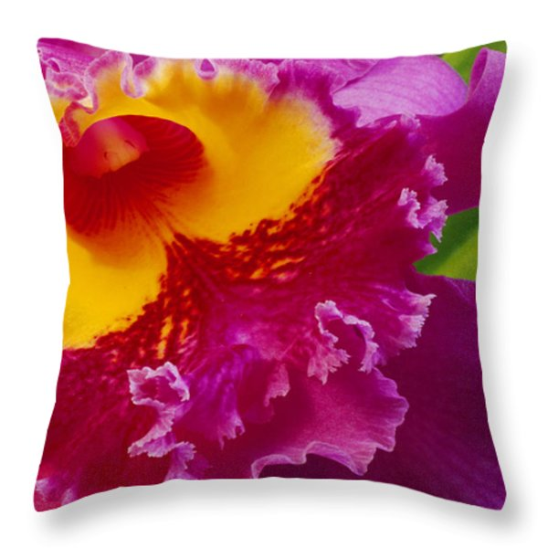 A Close View Of A Bright Pink Cattleya Throw Pillow by Jonathan Blair
