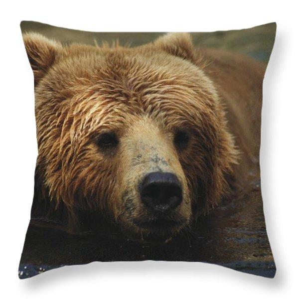A Close View Of A Captive Kodiak Bear Throw Pillow by Tim Laman