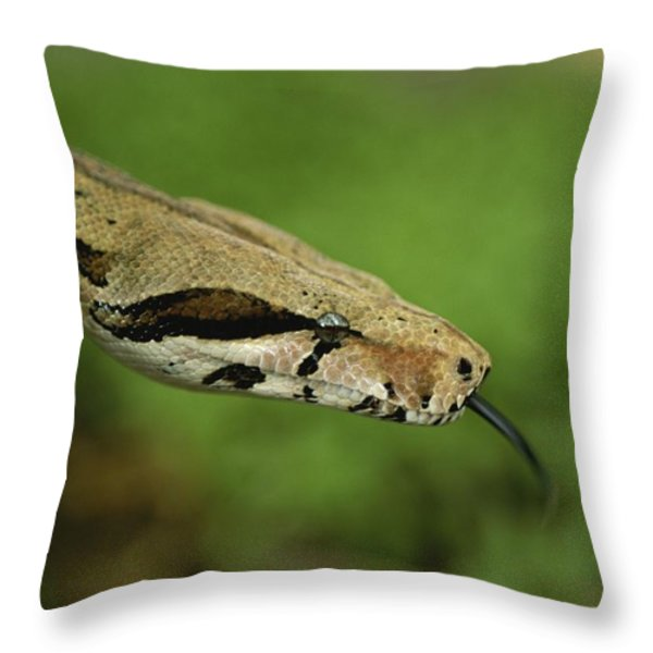 A Close View Of A Red-tailed Boa Throw Pillow by Joel Sartore