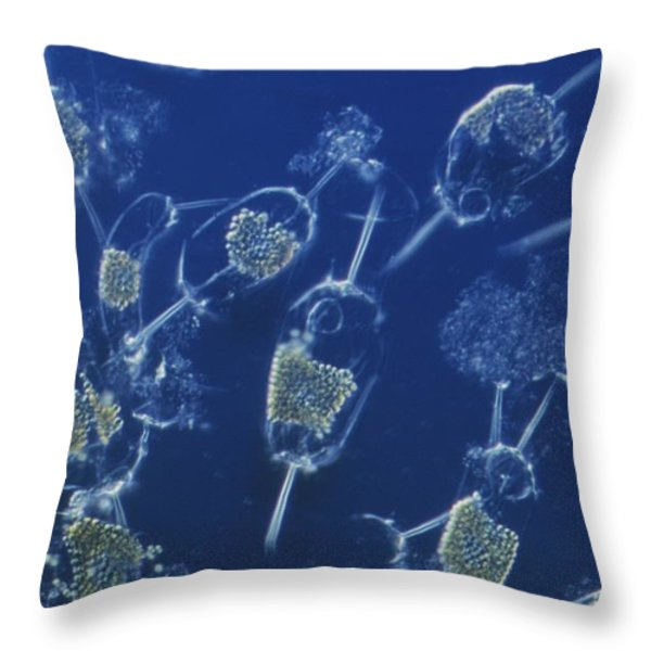 A Close View Of Marine Phytoplankton Throw Pillow by Bill Curtsinger