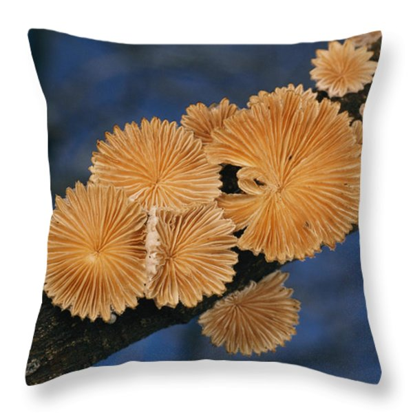 A Common Split Gill Mushrooms Sit Throw Pillow by Darlyne A. Murawski