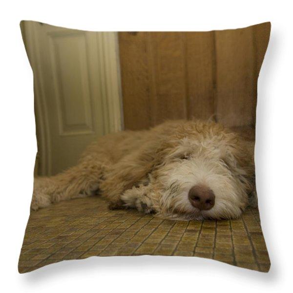A Dog Lies On A Linoleum Floor Throw Pillow by Joel Sartore