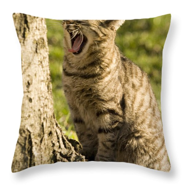 A Domestic Cat Yawning By A Tree Throw Pillow by Tim Laman