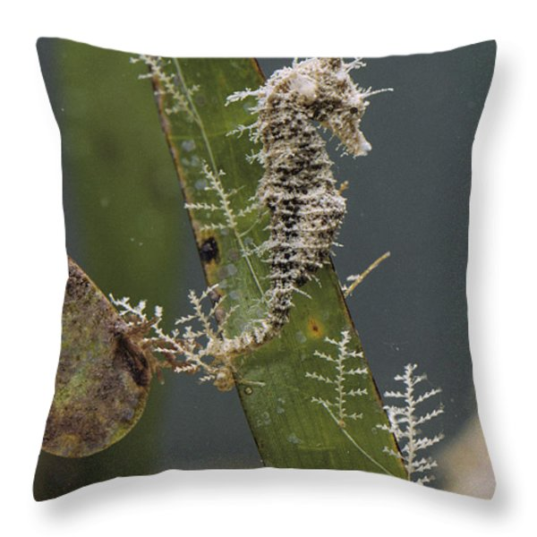 A Dwarf Sea Horse On Turtle Grass Throw Pillow by Robert Sisson