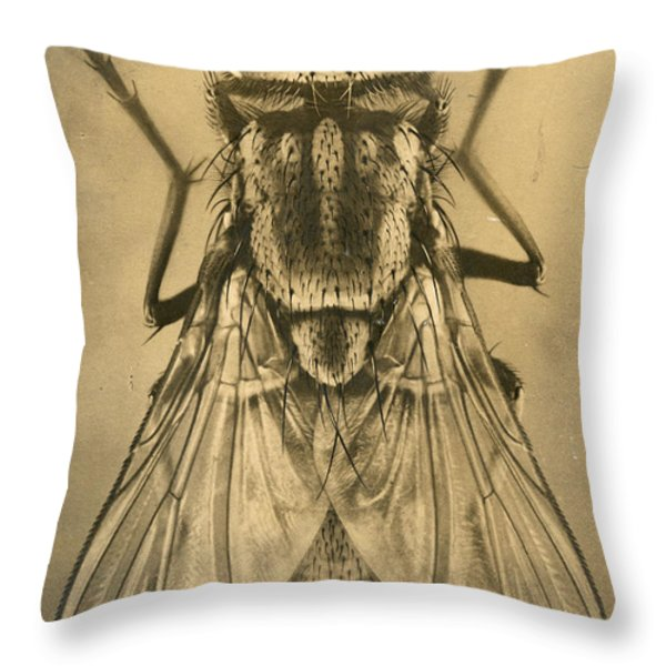 A Female House Fly Resting On Glass Throw Pillow by N.A. Cobb