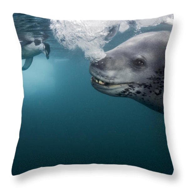 A Female Leopard Seal Brings Her Catch Throw Pillow by Paul Nicklen