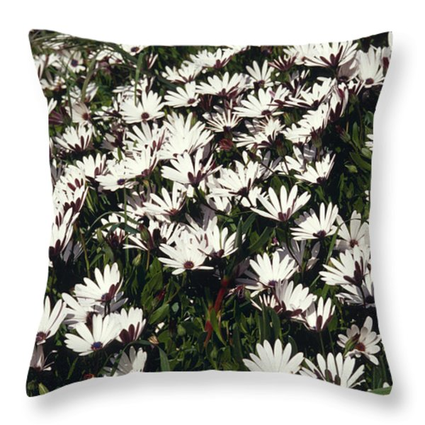 A Field Of Prolofic White Daisy Flowers Throw Pillow by Jason Edwards