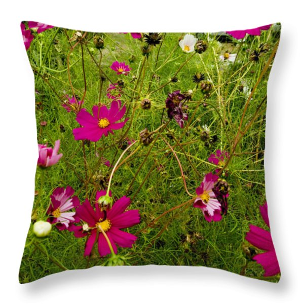A Field Of Wild Flowers Growing Throw Pillow by Todd Gipstein