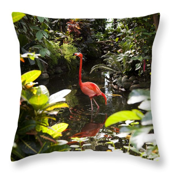 A Flamingo Wades In Shallow Water Throw Pillow by Taylor S. Kennedy