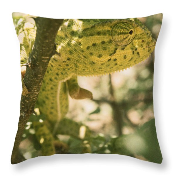 A Flap-necked Chameleon Well Throw Pillow by Jason Edwards