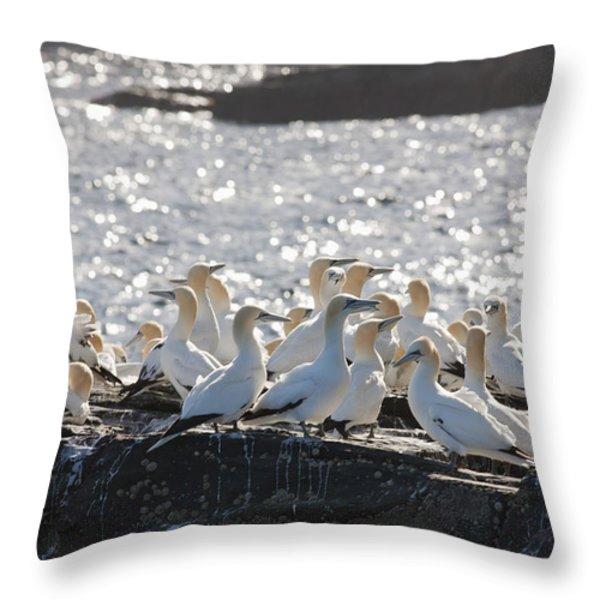 A Flock Of Gannets Standing On A Rock Throw Pillow by John Short