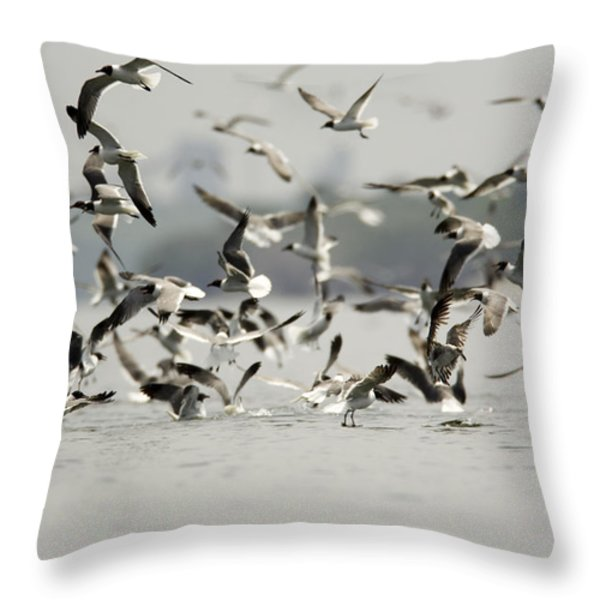A Flock Of Laughing Gulls Larus Throw Pillow by Tim Laman