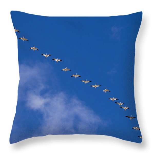 A Flock Of Snow Geese Chen Throw Pillow by Ralph Lee Hopkins