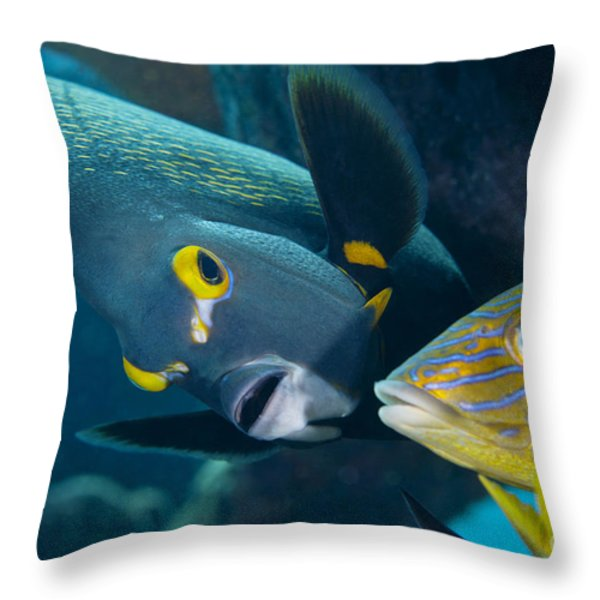 A French Angelfish Swims Up Close Throw Pillow by Terry Moore