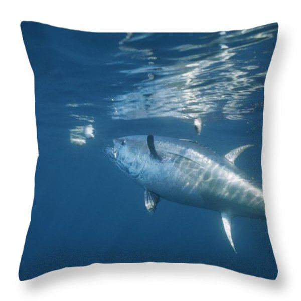 A Giant Bluefin Tuna Feeds Throw Pillow by Brian J. Skerry