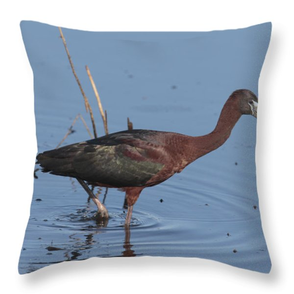 A Glossy Ibis Wades For Food In A Salt Throw Pillow by George Grall