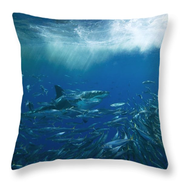 A Great White Shark Swims Close Throw Pillow by Mauricio Handler