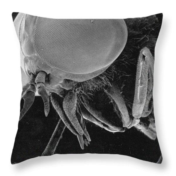 A Greenhead Fly Tabanus Nigrovittatus Throw Pillow by Darlyne A. Murawski