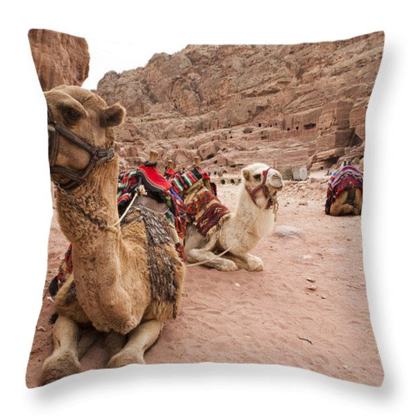 A Group Of Camels Sit Patiently Throw Pillow by Taylor S. Kennedy