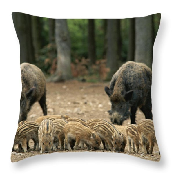 A Group Of Young Wild Boars Nose Throw Pillow by Norbert Rosing